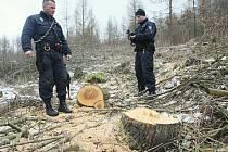 KRÁDEŽ. Během jedné ze společných hlídek státních policistů a třebenického městského strážníka nalezli její členové hned několik míst, kde došlo ke krádežím dřeva. Policisté i strážník se nyní budou pohybovat po lese mnohem častěji.