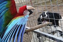 Cirkus Berosini láká na papouščí show