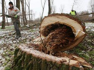 Na Osmičce proběhlo další kácení stromů
