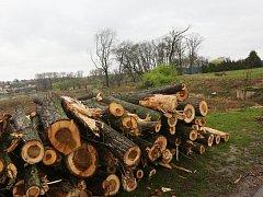 Na Zálabí padlo několik desítek stromů.