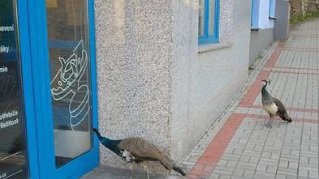 Den otevřených dveří přilákal do Mevy i nezvyklé návštěvníky.
