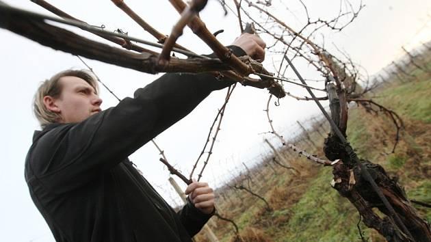 V těchto dnech vinohradníci provádějí tradiční zimní řez révy, čímž vinice připravují na novou sezonu.