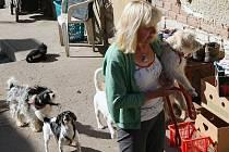 ZDEŇKA TUČKOVÁ řeší nepříjemnou životní situaci své sestry Dany Klusové z Nových Kopist.  Pomáhá jí vyrovnat se se ztrátou nejen jejího domova, ale i domova dvanácti psů, které chová. Nenachází ale zatím žádné východisko.