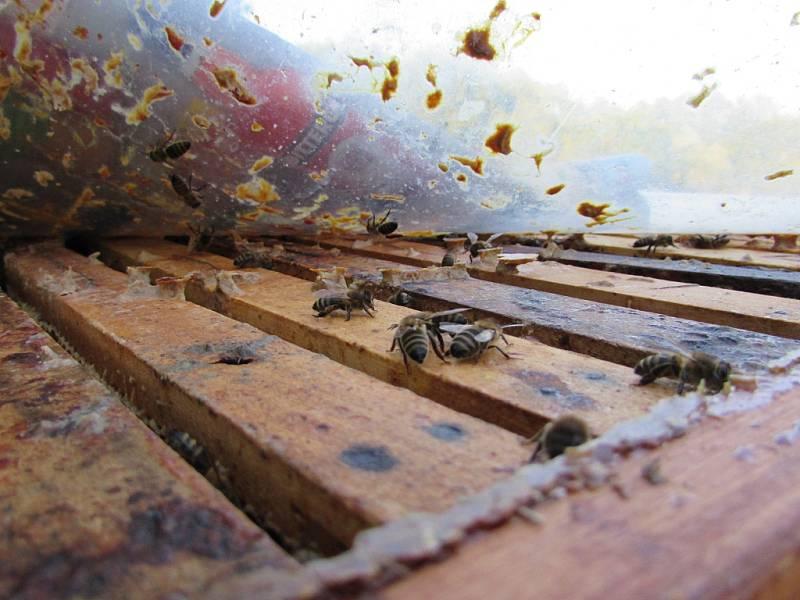 Mladý včelař Kamil Valenta chová včely v Držovicích a na Lhotsku u Úštěka