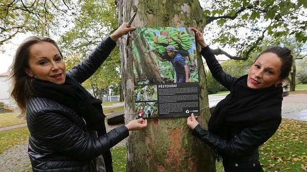 Výstava na stromech. Ilustrační foto.