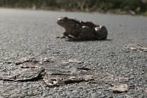 Žabí masakr u Milešova.