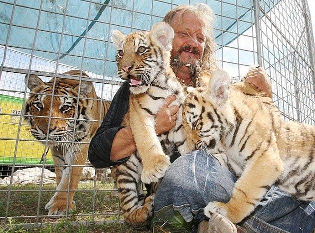 Principál cirkusu JOO představuje tygří mláďata.
