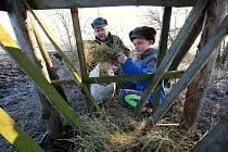 Začalo mrznout, a tak myslivci začali intenzivně přikrmovat zvěř. Myslivec Tomáš Neudek se synem Tomášem z Chodovlic na Lovosicku vyrazili doplnit krmelce poblíž Klapý.