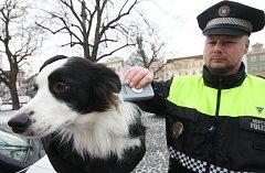 Přístroj kontrolující čipování psů v Litoměřicích