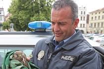 Strážník Tomáš Rotbauer zachránil zraněnou poštolku.