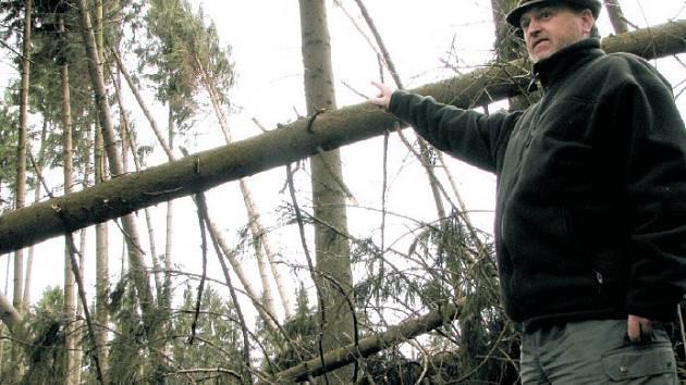 ŠKODY PŮJDOU DO TISÍCŮ. Revírník společnosti Lesy České republiky Aleš Kryšpín ukazuje škody, které víkendová vichřice Emma způsobila na Třebušínsku.