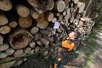 Deponie dřeva na Litoměřicku hospodáři Lesů ČR ošetřují postřikem proti kůrovci a proto umisťují zákazy.