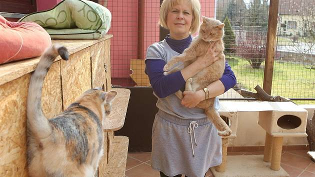 PRESTIŽNÍ ocenění Žena regionu patří v Ústeckém kraji Milaně Petráskové, která provozuje v Dobříni u Roudnice nad Labem  společně se svým manželem útulek Kočičí domov Sluníčko.