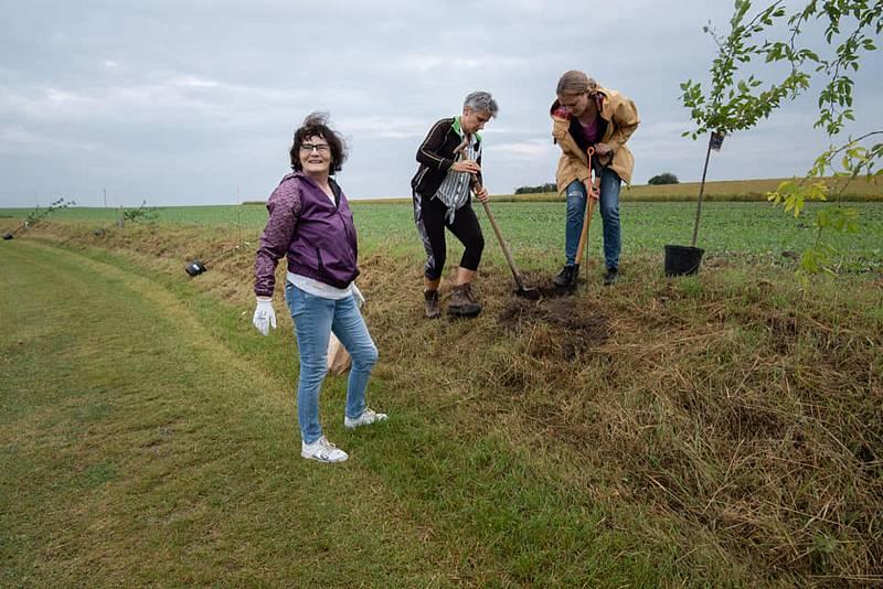 V Rohatcích na Pohádkové cestě vysadili nové stromy.