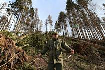 Zdecimovaná část obecních lesů v Lovečkovicích po řádění Sabine.