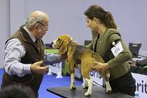 Mezinárodní výstava psů v areálu Zahrady Čech v Litoměřicích. Snímek z roku 2019