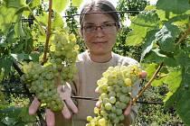 VINAŘKA Hana Líbalová na vinici pod Sovicí před letošní sklizní.