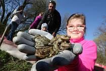 Děti z velkobřezenské školy sbíraly migrující žáby, které zůstaly za ochrannou bariérou, a odnášely je do rybníka.