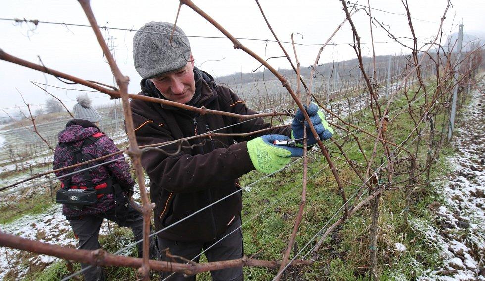 Vinaři ze žalhostického Vinařství pod Radobýlem vyrazili do vinohradu na prořez révy