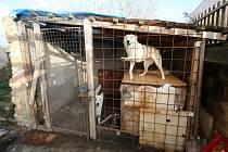 Litoměřičanka před dvěma lety obvinila místní strážníky, že neposkytli pomoc zraněné kočce. Tentokrát ale čelí sama obvinění s týrání psů.