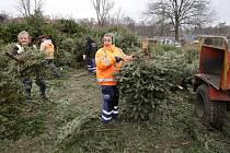 Technické služby v Litoměřicích postupně svážejí dosloužilé vánoční stromky k likvidaci.