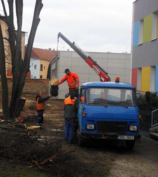 Kácení stromů u školky v Litoměřicích na konci ledna 2019