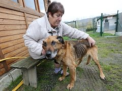 Majitelka psího útulku Milena Maskulanisová ukazuje týraného psa, kterého přivezli z Vrbičan.