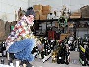 Vinařské Litoměřice se blíží. Brigádnice Veronika Rynešová třídí vzorky pro hodnotící komise.