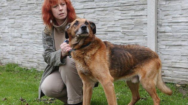Spolumajitelka řepnického útulku Jana Kymrová ukazuje, jak se zlepšil zdravotní stav týraného psa.