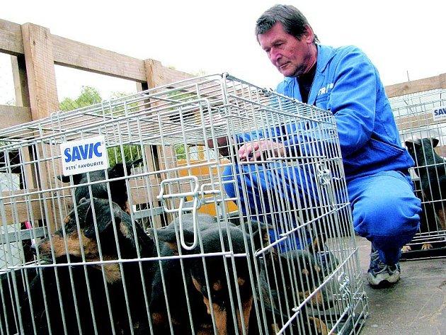 Miroslav Knotek, pracovník Městského úřadu ve Šternberku, přivezl do Řepnice na Litoměřicku klece s šestnácti týranými psy ze Štarnova u Olomouce. O zvířata se tu nyní postarají manželé Maskulanisovi, aby si je později mohli převzít noví zájemci.