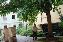 POHODA. Podle místostarosty Litoměřic Jaroslava Tvrdíka je dvorní trakt budovy radnice příjemným místem pro odpočinek.