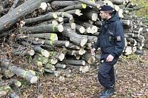 Lovosická policie pomáhá každým rokem při kontrole lesů pod Košťálovem. Téměř vždy zde policisté, ale i revírníci zaznamenají krádeže dřeva.