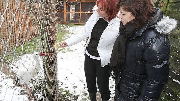 Radní Ústeckého kraje Jana Ryšánková a zastupitelka Dagmar Waicová iniciovaly pomoc Záchranné stanici pro handicapovaná zvířata Falco v Dolním Týnci. Ve čtvrtek stanici navštívily a dovezly darem krmivo pro zvířata a ptáky.
