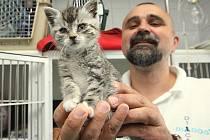 KOČKY JSOU nedílnou součástí veterinární kliniky. Jsou zde pro radost i pro případy nutnosti, kdy je potřeba darovat krev jiným zvířecím miláčkům. Veterináři se o ně starají od koťat a nedají na ně dopustit.