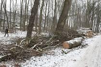 Část brozanského lesa padla.