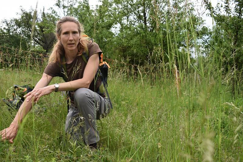 Botanička Kateřina Tremlová ukazuje, jak důkladná pastva svědčí louce