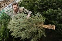 Prodej vánočních stromků začíná