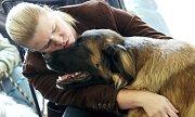 Krajská výstava psů na výstavišti Zahrada Čech v Litoměřicích