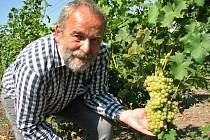 Vinař Radoslav Potůček měl z velmi dobré úrody hroznů z panenského vinohradu radost. Sklizené hrozny z vinice poblíž Trnovan poslouží k výrobě bio vína.