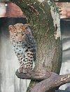 Dejte jméno kotěti v ZOO a vyhrajte plyšového levharta