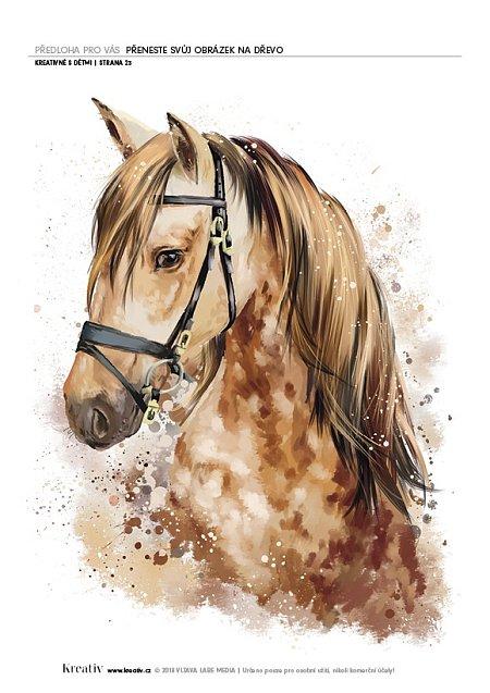 obrázek kůň