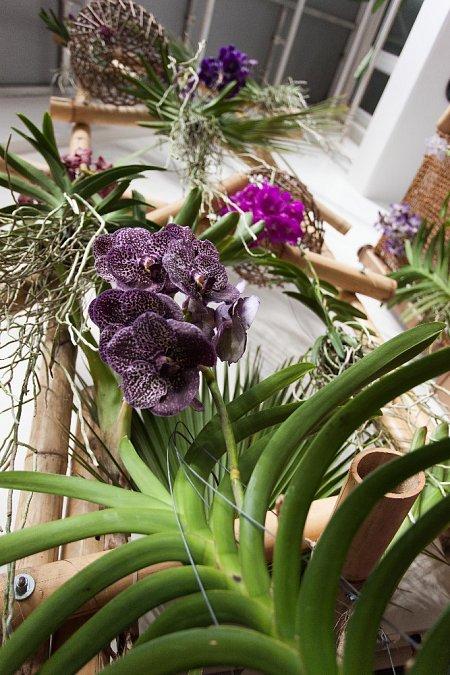 orchidej5