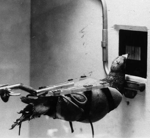 Holuby naváděna střela měla nacisty pěkně potrápit