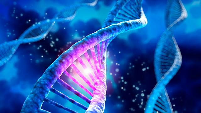 DNA nese naší genetickou informaci