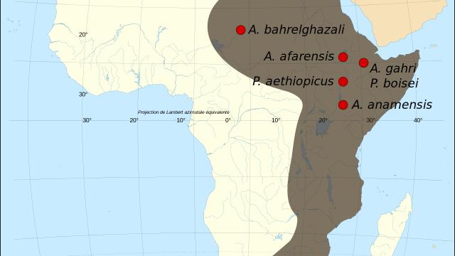 Mapa nalezení fosilií druhu Australopithecus anamensis