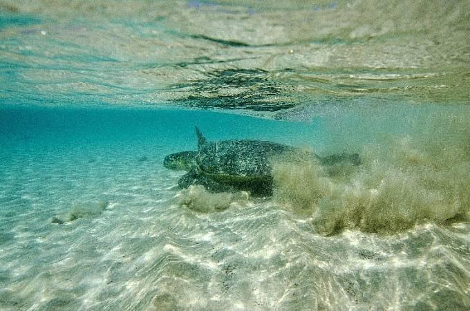 Úspěch pro Súdán: korálový útes Sanganeb v Rudém moři, záliv Dungonab a ostrov Mukkawar dohromady tvoří národní park Mukkawar Island Marine.