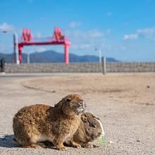 Ōkunoshima - přezdívaný Králičí ostrov - je malý ostrov nacházející se dvě míle od japonského města Takehara.