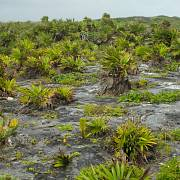 Pobřežní vegetace na skaliscích u města Tulum