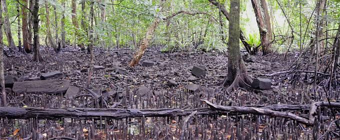 Nan Madol je 99 umělých ostrůvků postavených se zdmi z čediče a korálů v Mikronésii. Kvůli prorůstajícím mangrovovým porostům je komplex na seznamu ohrožených památek.