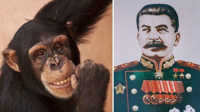 Stalin měl na experimentu křížení člověka s opicí zájem.